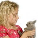 l'enfant et le lapin